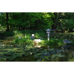 Szeged Botanic garden.